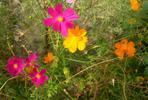 [+] Увеличить - цветы моего детства