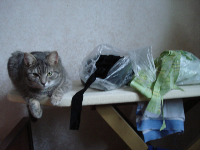 Кот швея