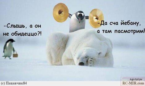 пингвины!) (470x277, 25Kb)