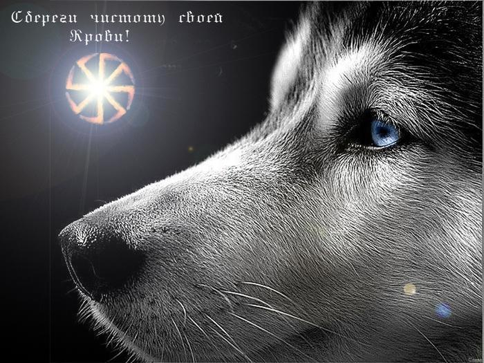 http://img1.liveinternet.ru/images/attach/b/0/1445/1445927_1024h768.jpg