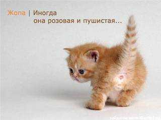 11384398_zyopa (320x238, 6Kb)