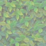 green77 (150x150, 5Kb)