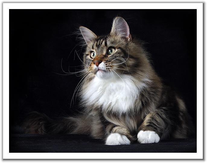 Красивые кошки обсуждение на liveinternet