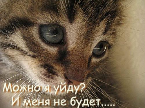 12251874_9580140_Mozhno_ya_uydu (500x373, 52Kb)