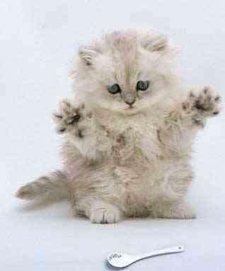 Мои аплодисменты и цветы.  Примите котёночка на новоселье.