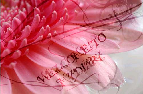 3973008_7614561_7197406_welcome_to_my_diaty1 (501x332, 31Kb)