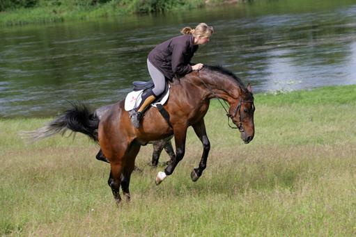 """Лошадь """"козлит"""" - Tripod"""