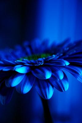 цветочек (267x400, 21Kb)