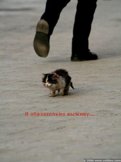 http://img1.liveinternet.ru/images/attach/b/0/21499/21499372_21191934_20152518619.jpg
