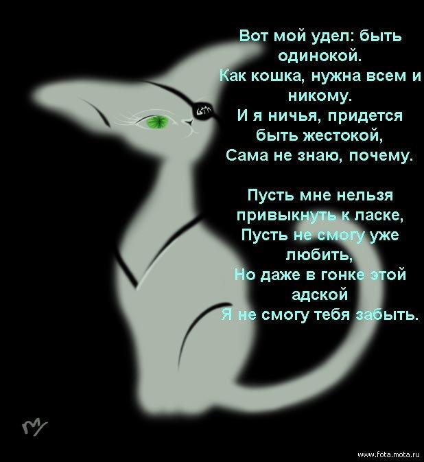 Статусы про то что я кошка
