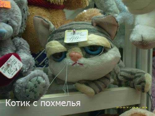 http://img1.liveinternet.ru/images/attach/b/1/12205/12205448_kotik_s_pohmelya.jpg