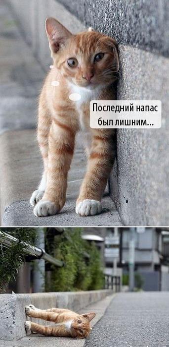 http://img1.liveinternet.ru/images/attach/b/1/12325/12325034_kot.jpg