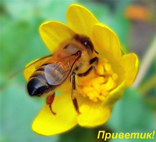 http://img1.liveinternet.ru/images/attach/b/1/13761/13761081_privetik.JPG