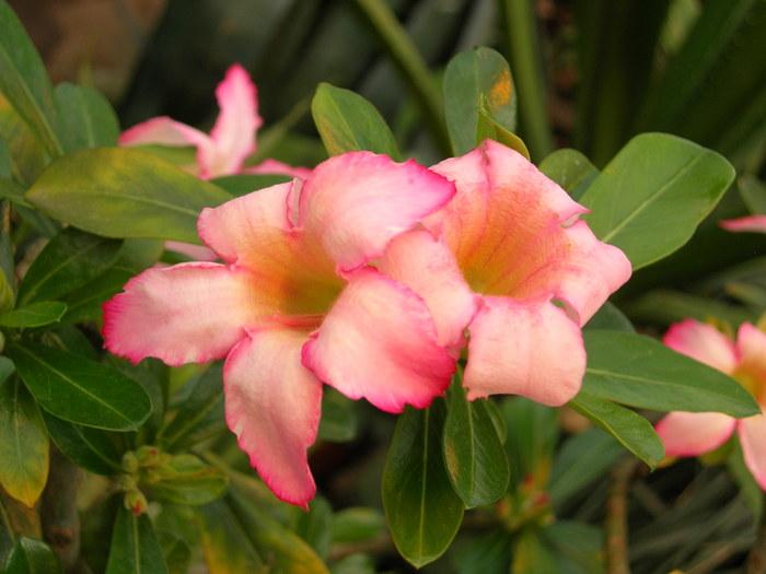 цветы (700x525, 105Kb)