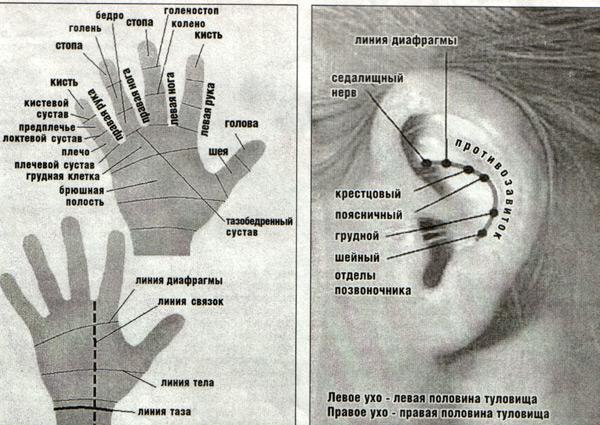 ухо-кисть (600x425, 116Kb)