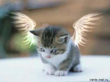 angel (386x289, 19Kb)