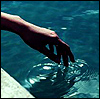 Hand_dipping_in_water_9387 (100x99, 15Kb)