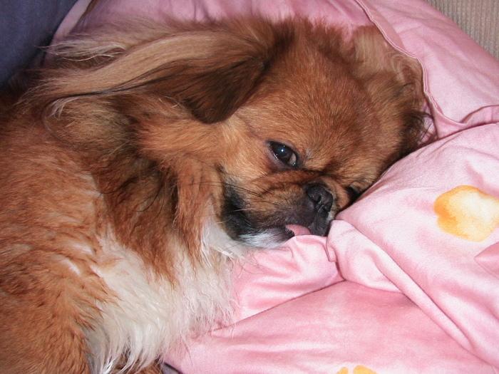 Моя собака - мое сердцебиение
