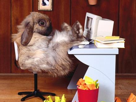 ебемся как кролики фото
