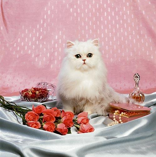 http://img1.liveinternet.ru/images/attach/b/1/8707/8707426_cat10.jpg
