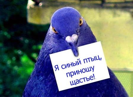 http://img1.liveinternet.ru/images/attach/b/2/0/125/125470_Ptica_schastya.jpg