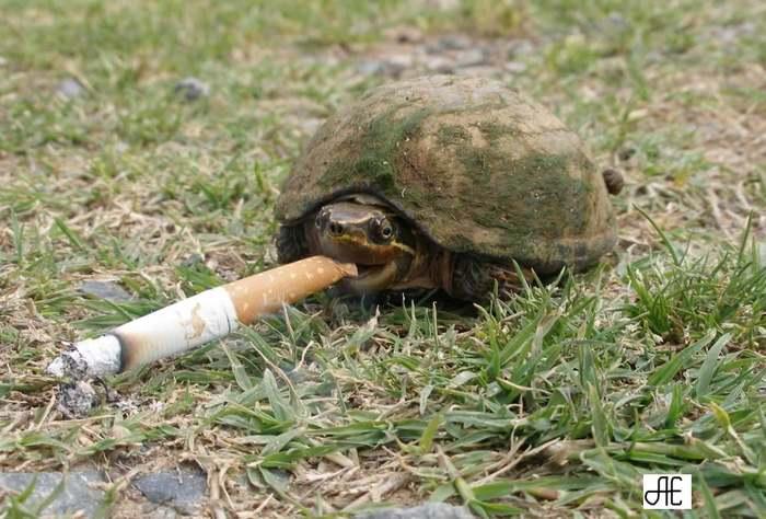 Кто бросил курить на 8 неделе беременности