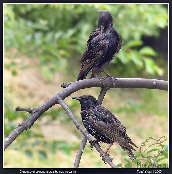 Смотрите еще птицы с гибкой шеей