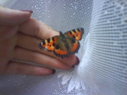 Ручная бабочка (448x336, 23Kb)