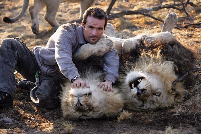 http://img1.liveinternet.ru/images/attach/b/2/21/431/21431242_1183014616_lions_vs_human_3.jpg