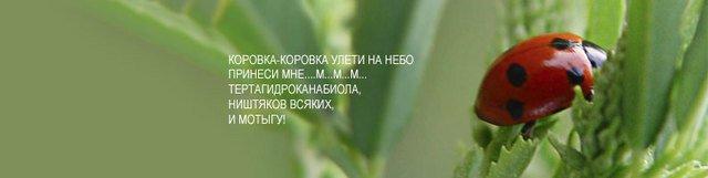 18186244_3447198_korovka1 (640x161, 15Kb)