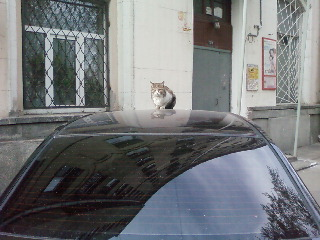 cat (320x240, 32Kb)
