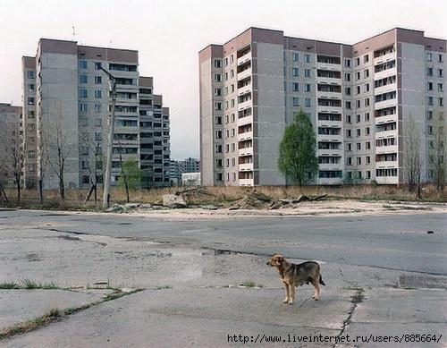 Чернобыль (500x389, 67Kb)