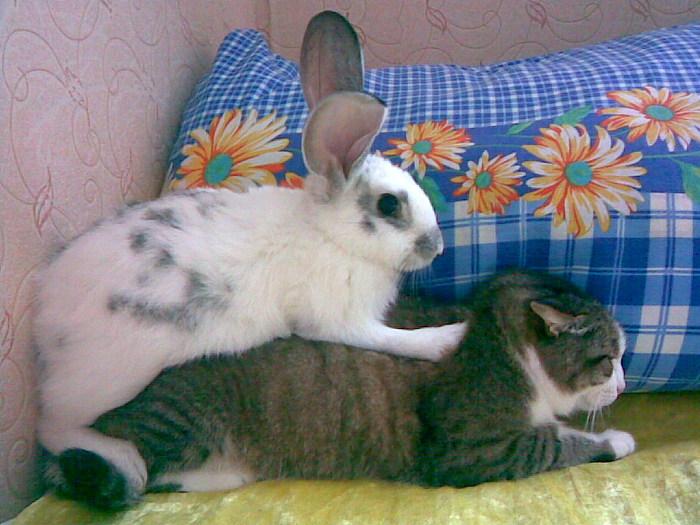Кролик с кошкой (700x525, 112Kb)