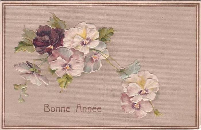 Садовый цветок анютины глазки фото