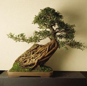 http://img1.liveinternet.ru/images/attach/b/3//41/347/41347859_1200939424_bonsay3.jpg