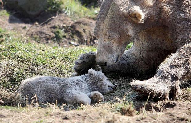 Смерть полярного медвежонка в Нидерландах