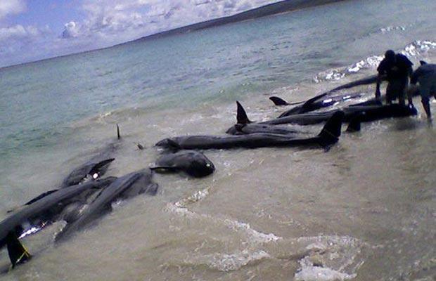 Спасение китов и дельфинов
