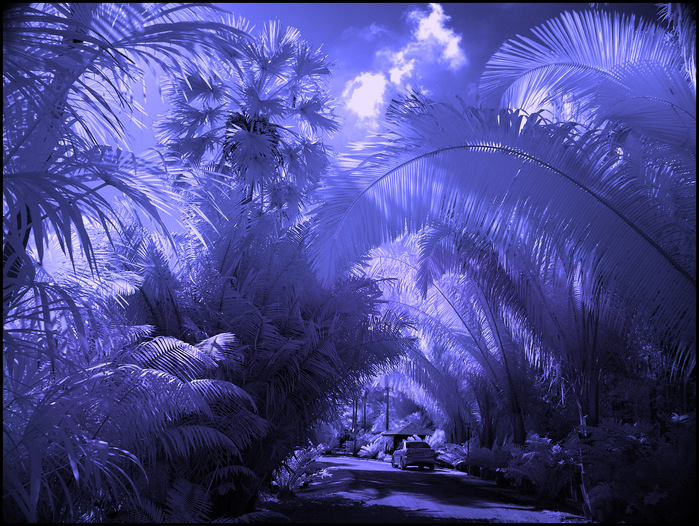 Картинки необычное в природе