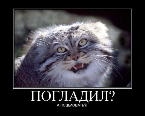 http://img1.liveinternet.ru/images/attach/b/3//41/895/41895634_1238579667_V7yeTEgPyS.jpg