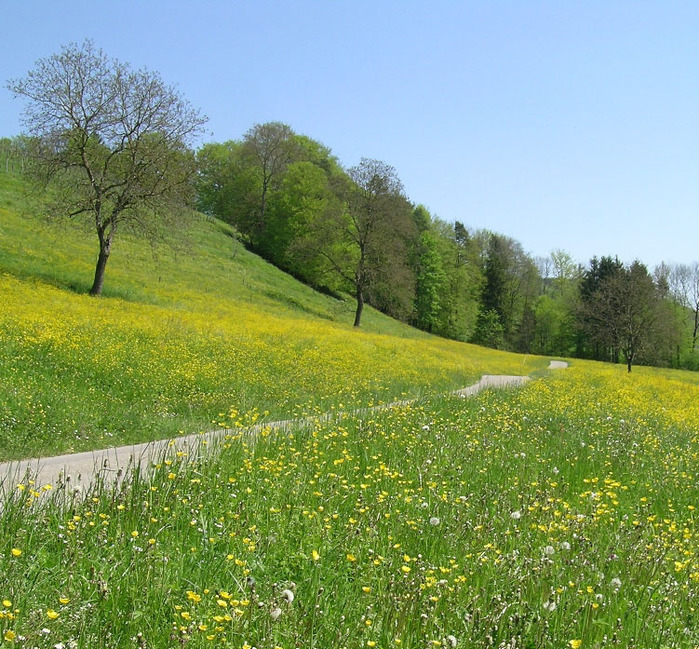 весна spring