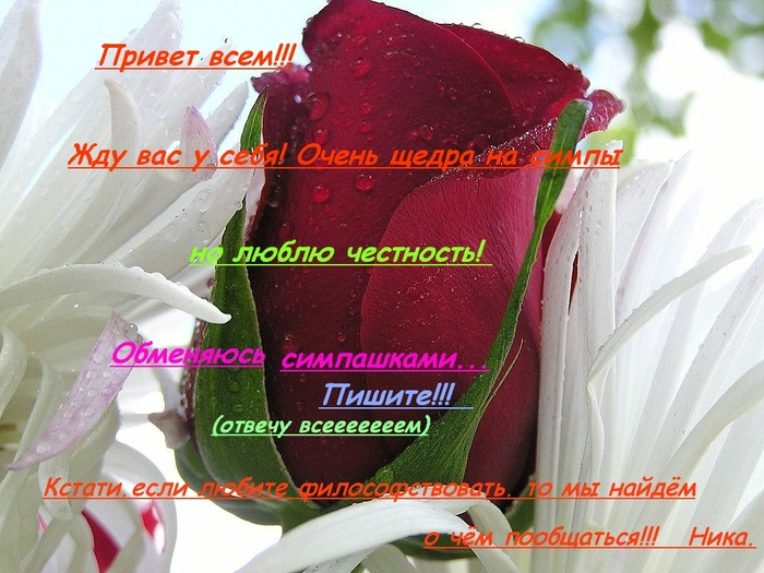 роза красная и белая лилия_____2 (700x525, 303Kb)
