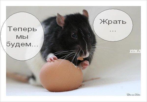 img_2173390_244_18 (600x416, 34Kb)