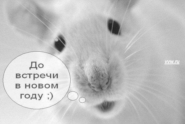 img_2173390_244_22 (600x401, 35Kb)