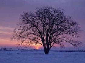 Дерево (280x210, 11Kb)