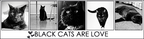 20742583blackcatsci6 (470x129, 77Kb)