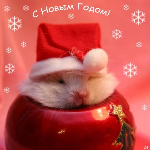 Веселая открытка С новым годом