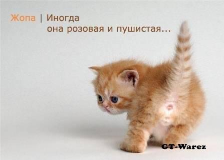 http://img1.liveinternet.ru/images/attach/b/3/13/935/13935023_zh.jpg