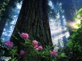 flowerses_in_wood_001 (160x120, 5Kb)