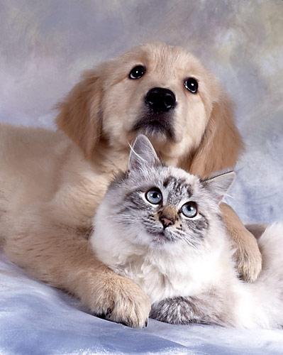 Котик с собачкой (399x500, 45Kb)