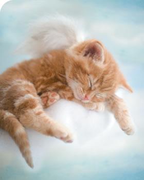Картинки с котятами 15705299_24394710_dzhye